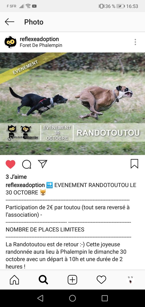 Randotoutou Reflexe Adoption